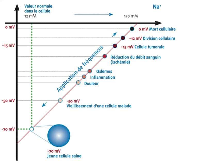 Membrane cellulaire : Une cellule forte, un fondement de la santé