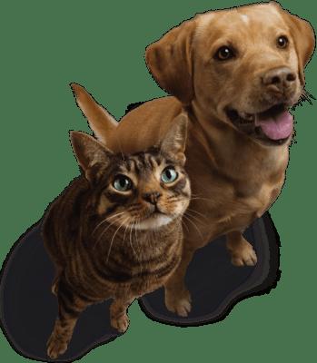 L'abonnement Healy Animal est maintenant disponible ! Pour beaucoup d'entre nous, nos animaux sont comme des membres de la famille. Quand il s'agit de nos animaux de compagnie, nous nous contentons du meilleur.