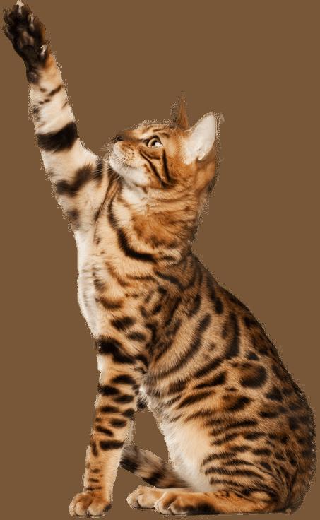 Les fréquences disponibles également pour les animaux